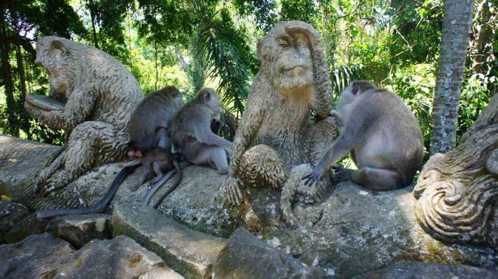 モンキー・フォレストの猿